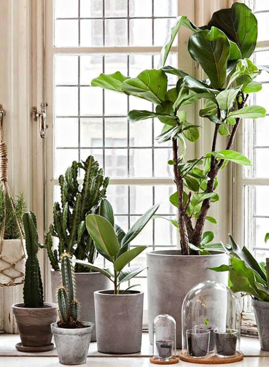 evdeki havayı temizleyen bitkiler