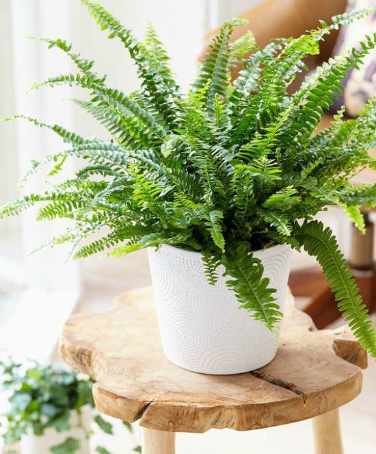 evin havasını en iyi temizleyen süs bitkileri aşk merdiveni