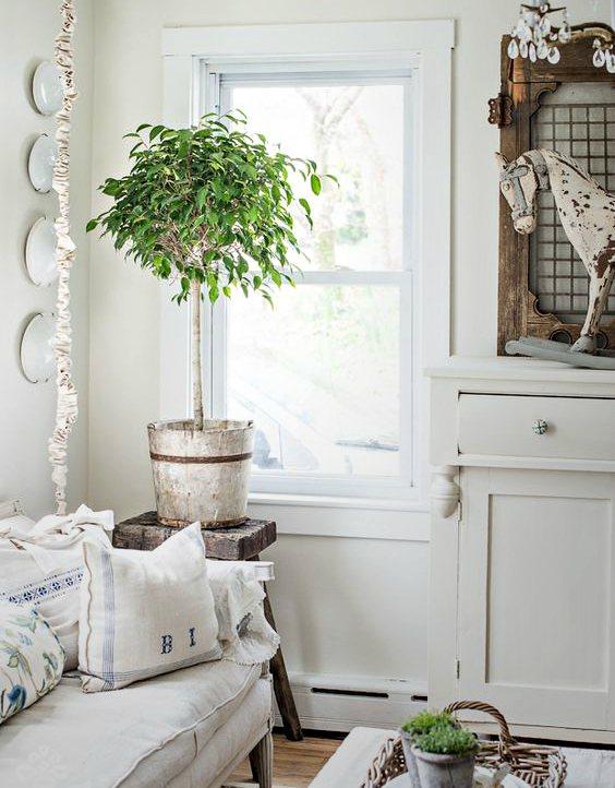 evin havasını en iyi temizleyen süs bitkileri benjamin
