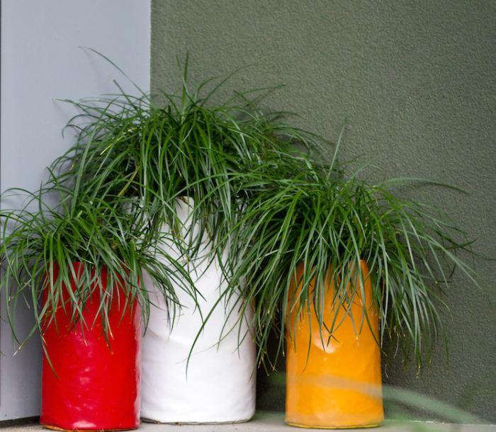 evin havasını en iyi temizleyen süs bitkileri mor çiçekli çim
