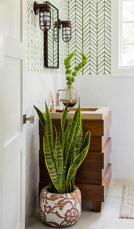 evin havasını en iyi temizleyen süs bitkileri paşa kılıcı