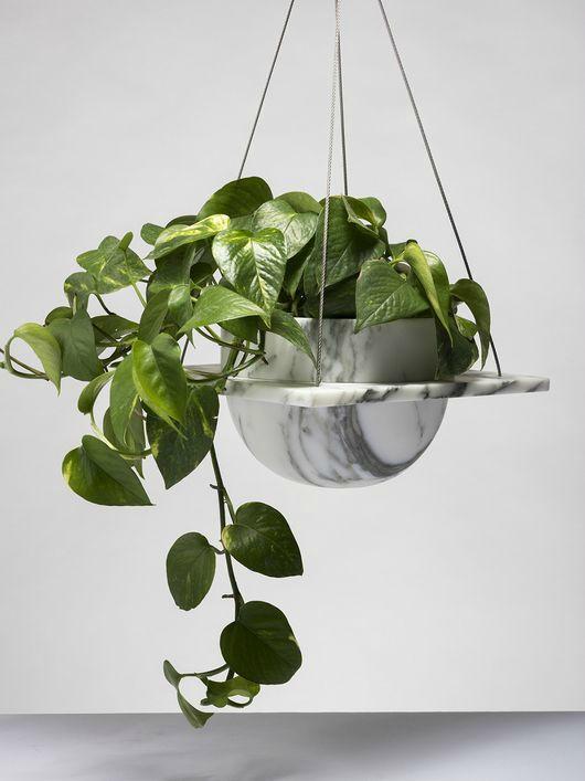 evin havasını en iyi temizleyen süs bitkileri salon sarmaşığı