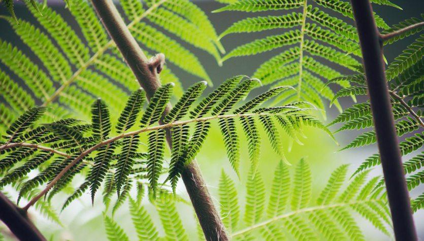 NASA'dan Onaylı Evdeki Havayı Temizleyen Bitkiler