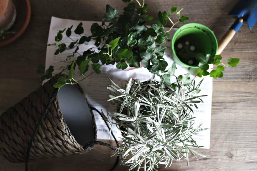 evin havasını temizleyen süs bitkileri