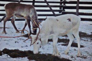Lapland: Karın Hüküm Sürdüğü Fantastik Topraklar, Bölüm 3