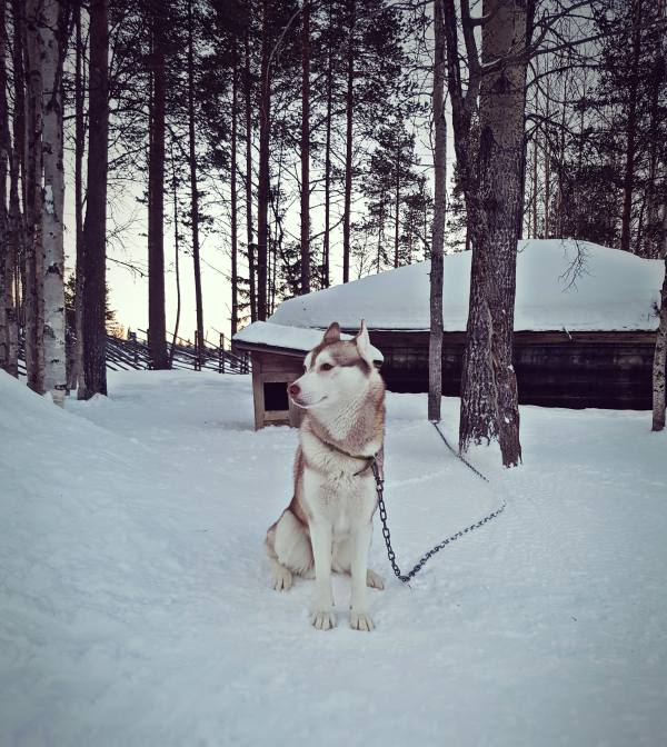 lapland levi finlandiya